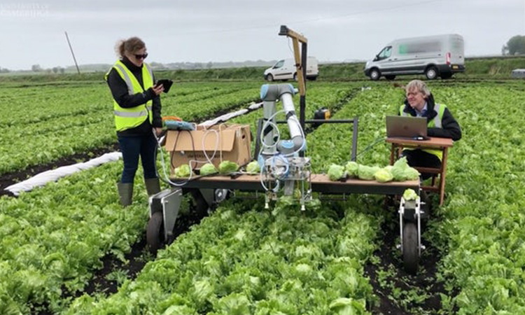 Machine learning helps robot harvest lettuce for the first time